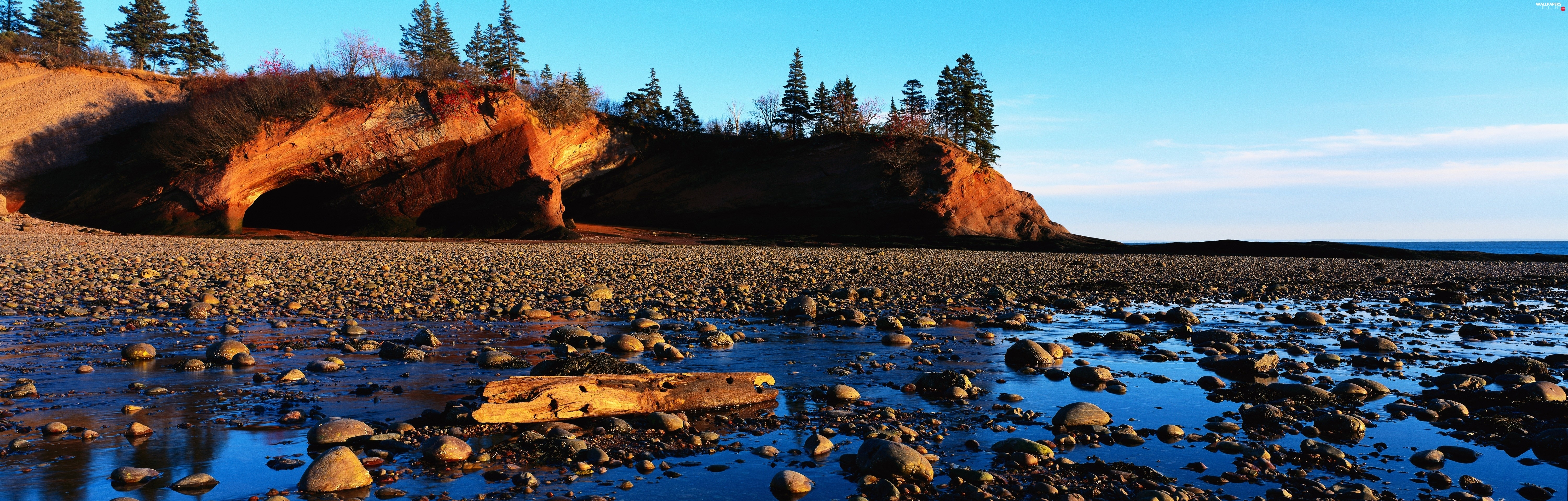 viewes, rocks, trees, coast, Conifers, Stones