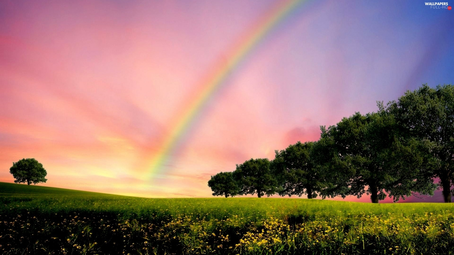 viewes, trees, Meadow, Great Rainbows