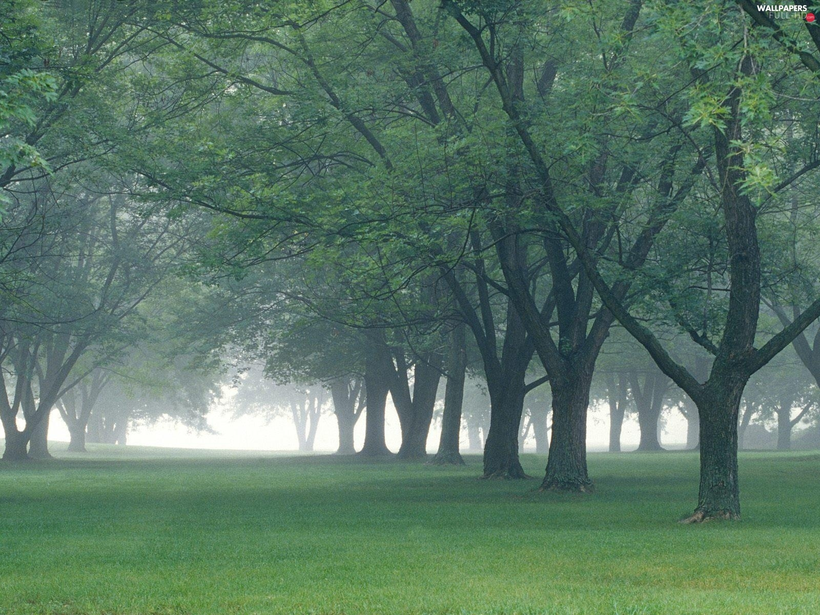 viewes, trees, Park, Fog