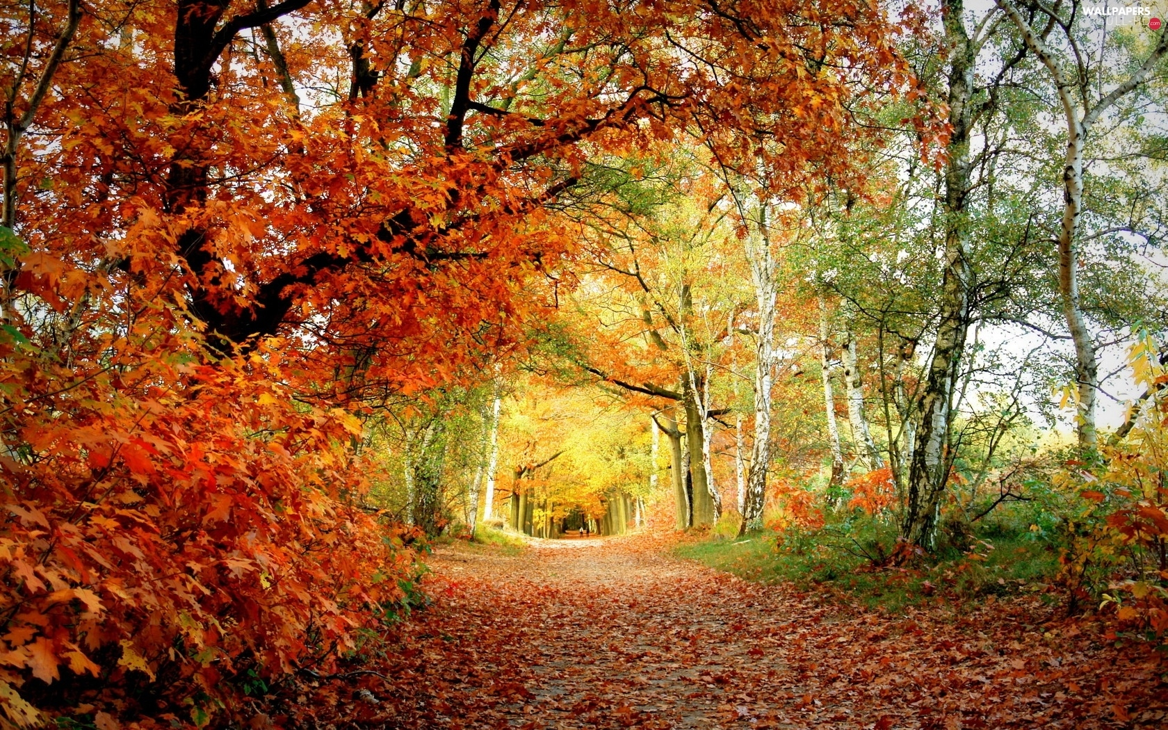viewes, trees, forest, Path, autumn