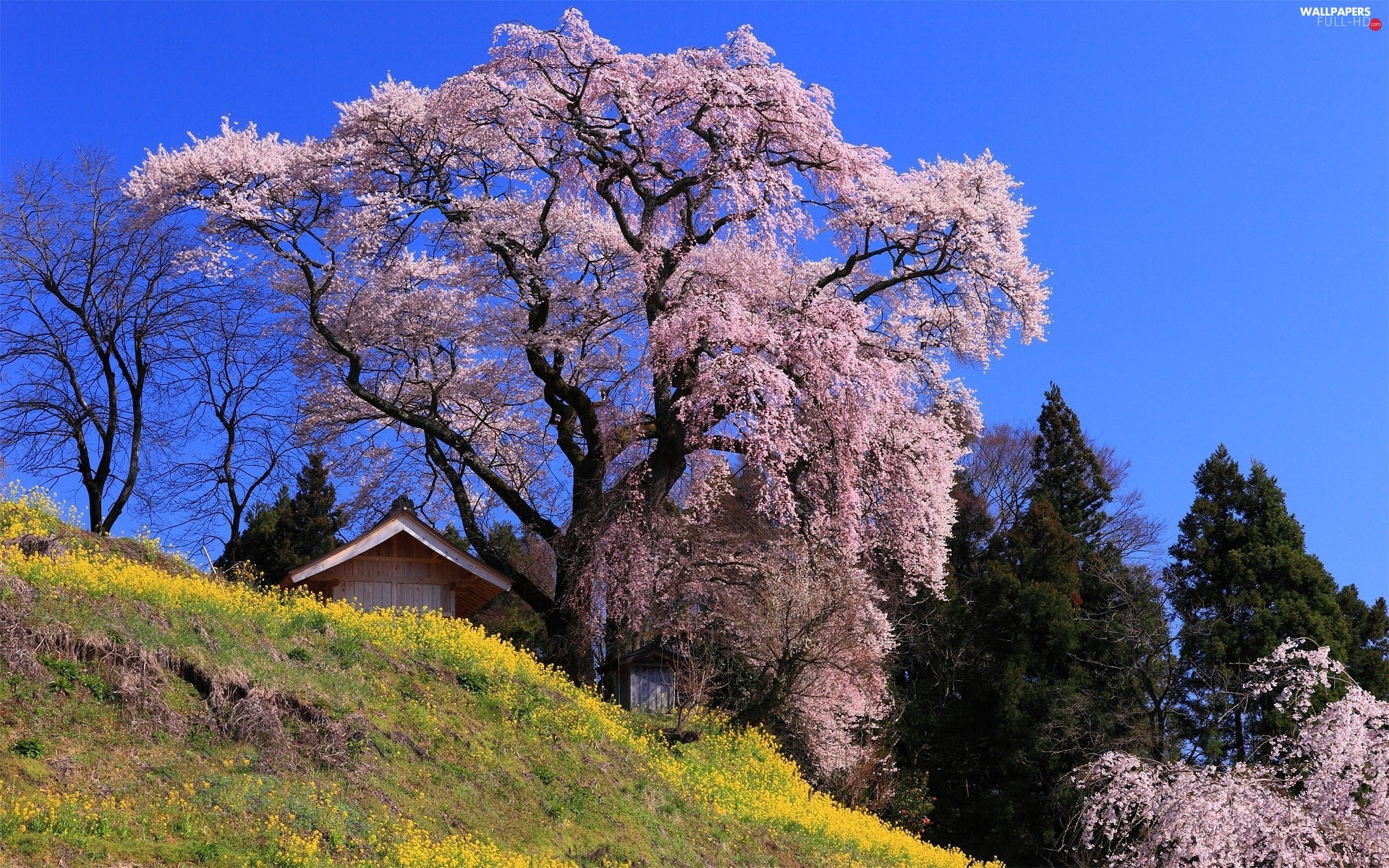 viewes, trees, Spring, flourishing