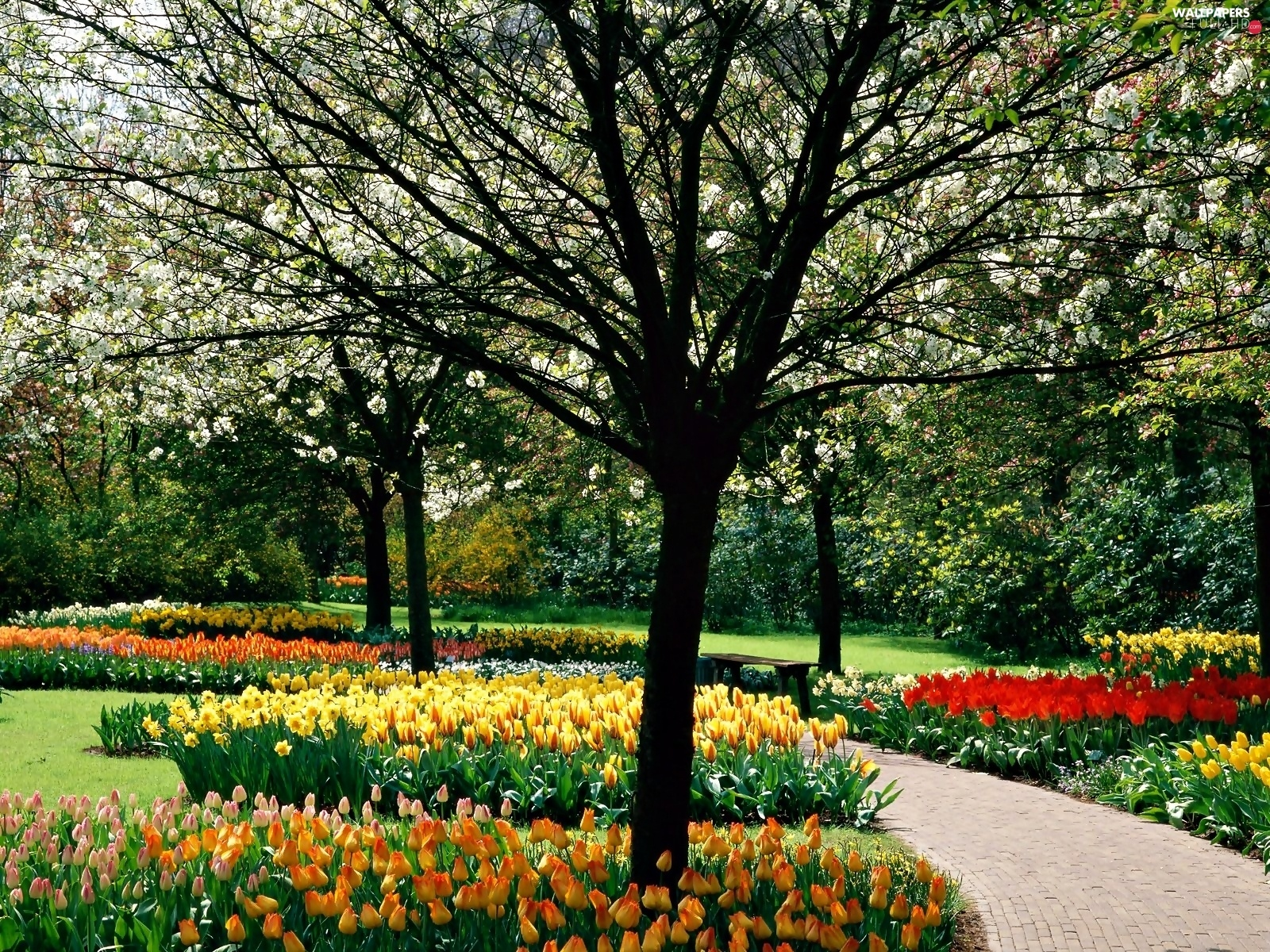 Tulips, viewes, trees, spring, color, Park, flourishing