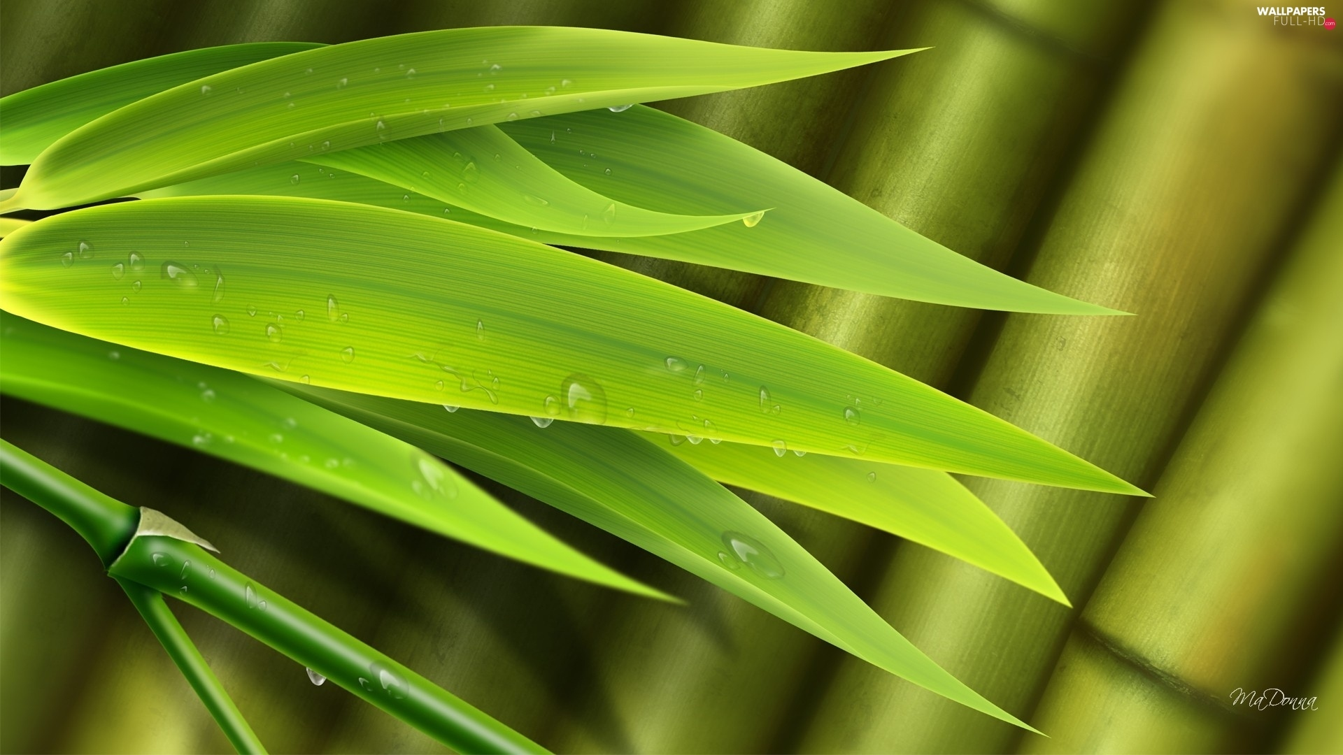 water, drops, bamboo, Leaf