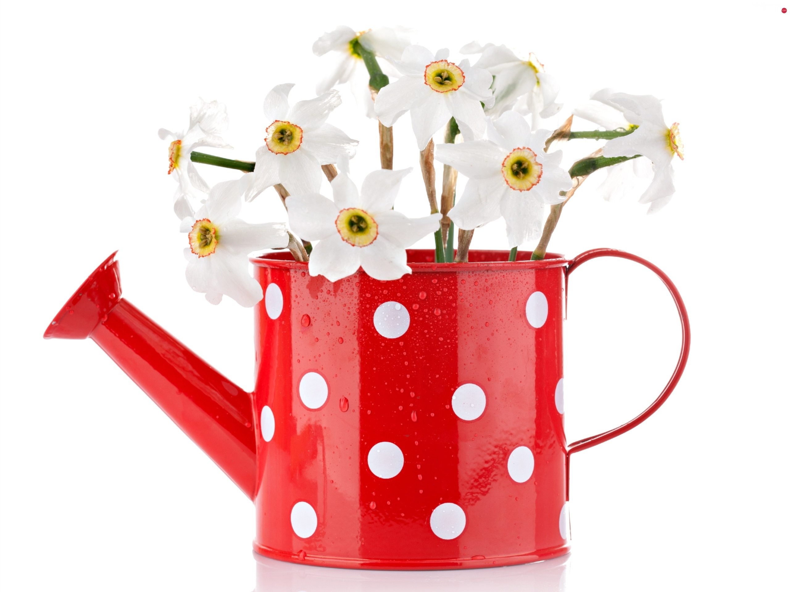 White, watering can, narcissus, peas, red hot